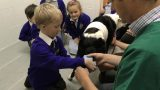Penpol School visit Animal Vets June 2019